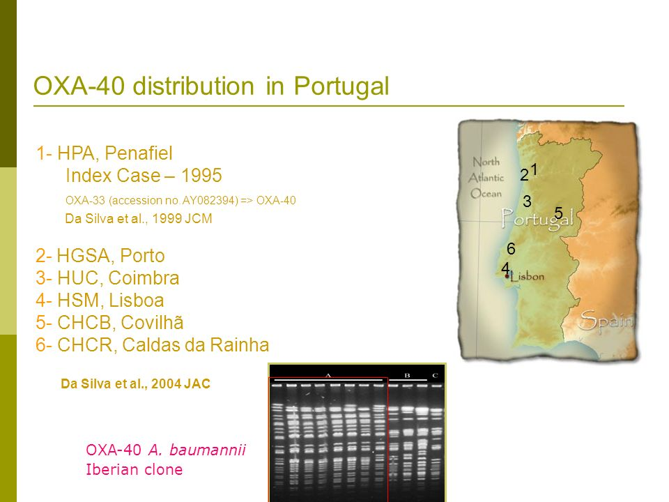 OXA-40 distribution in Portugal