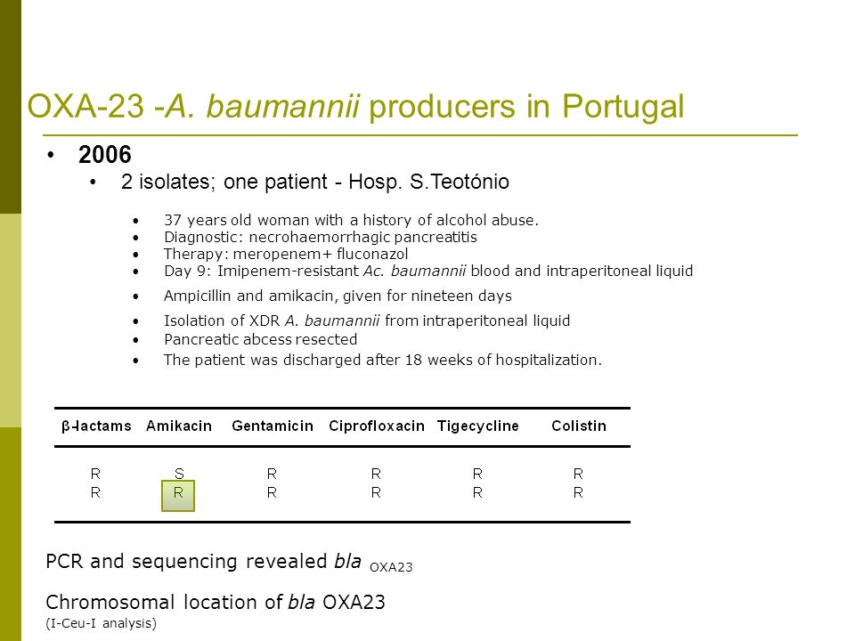 OXA-23 -A. baumannii producers in Portugal