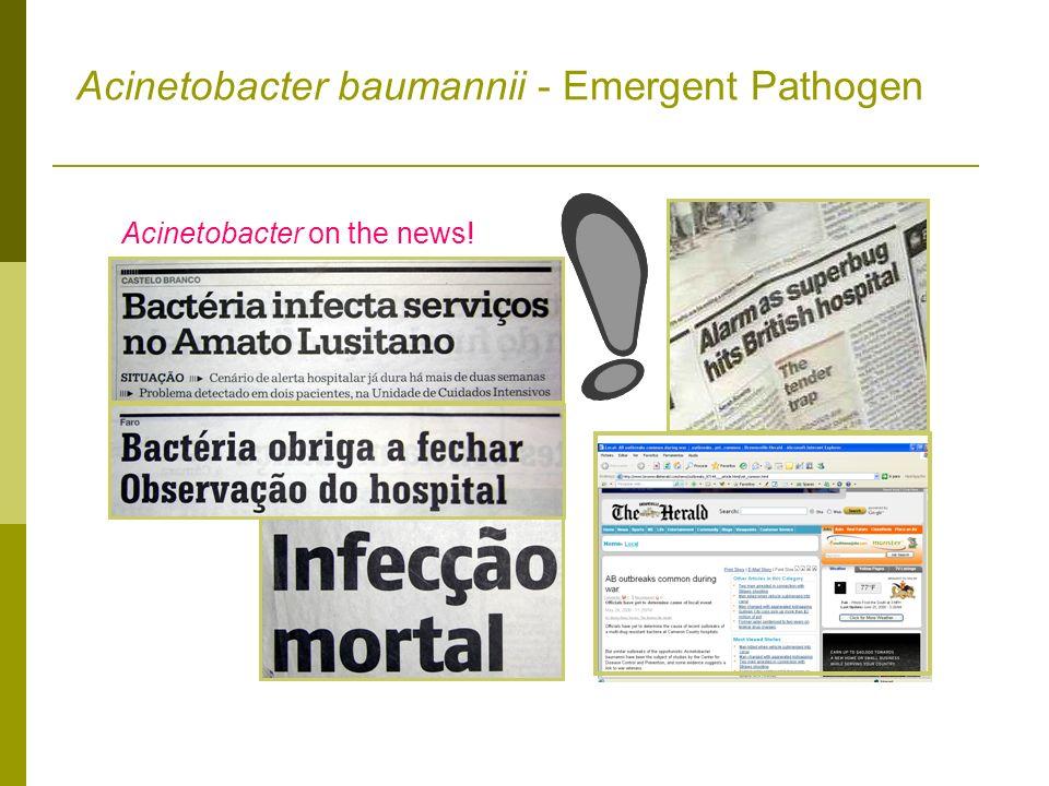 Acinetobacter baumannii - Emergent Pathogen