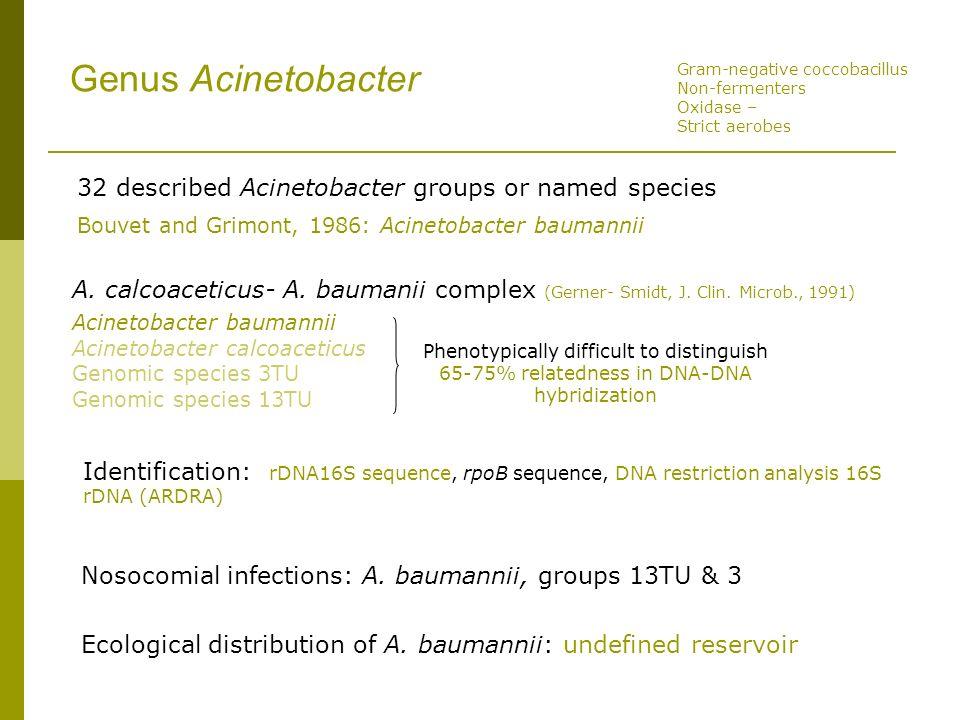 Genus Acinetobacter 32 described Acinetobacter groups or named species