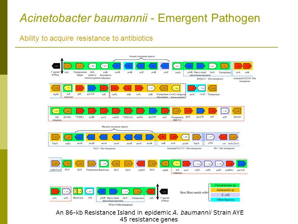 An 86-kb Resistance Island in epidemic A. baumannii Strain AYE