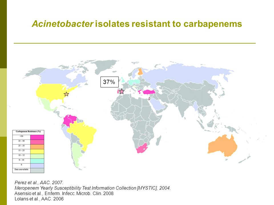 Acinetobacter isolates resistant to carbapenems