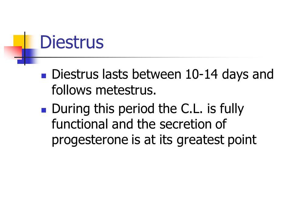 Diestrus Diestrus lasts between 10-14 days and follows metestrus.