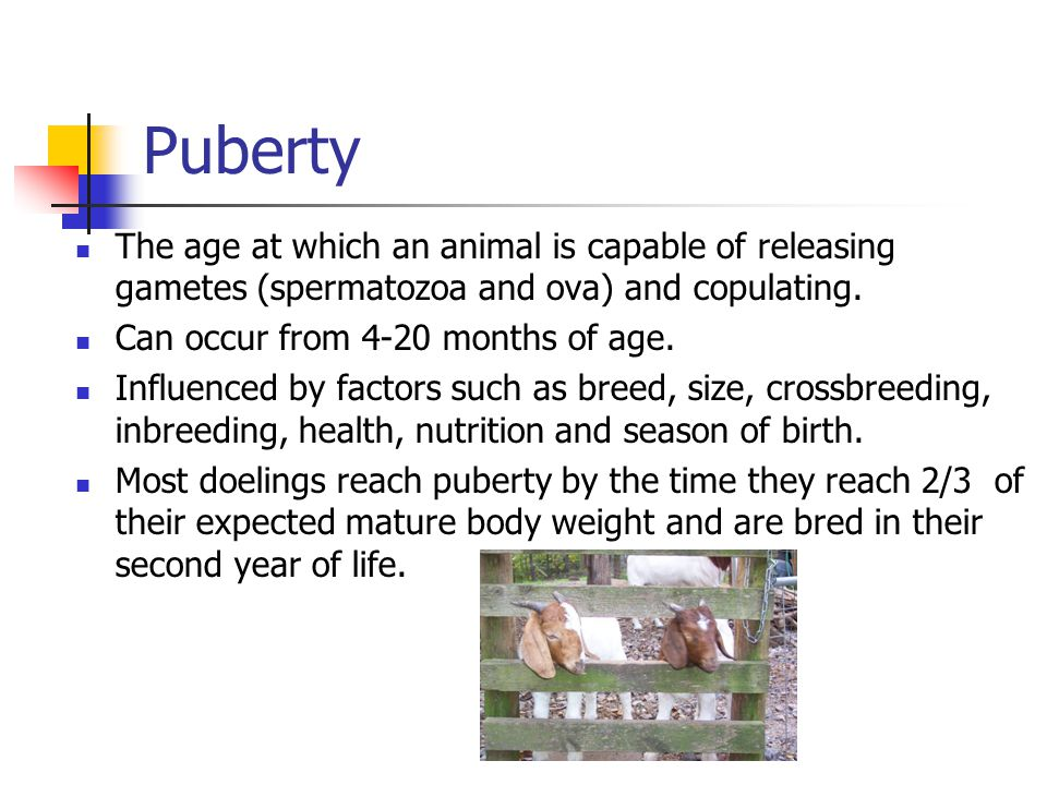 Puberty The age at which an animal is capable of releasing gametes (spermatozoa and ova) and copulating.