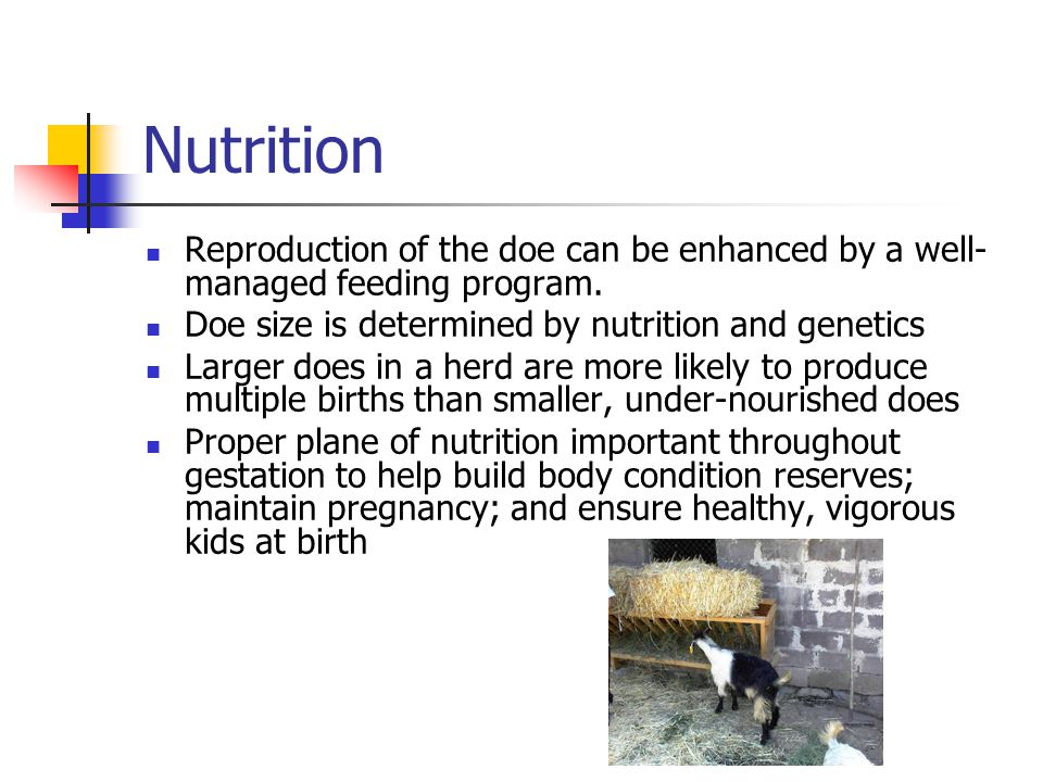 Nutrition Reproduction of the doe can be enhanced by a well-managed feeding program. Doe size is determined by nutrition and genetics.