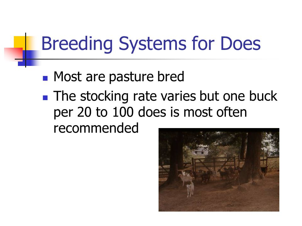 Breeding Systems for Does