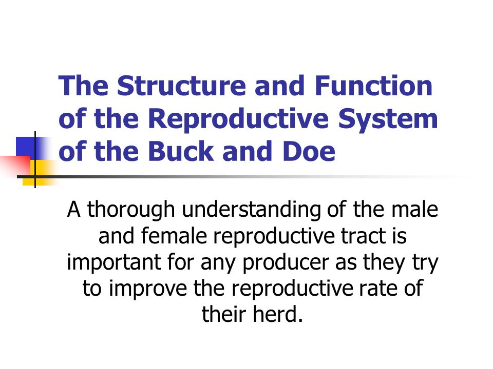 The Structure and Function of the Reproductive System of the Buck and Doe