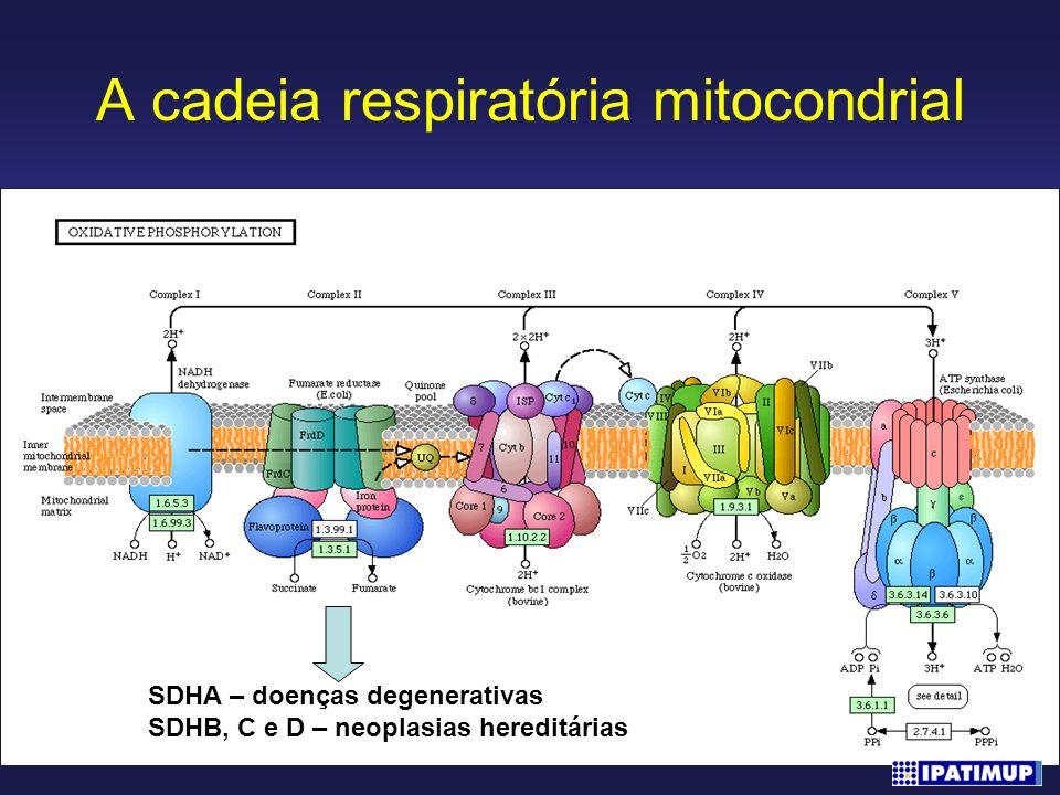 A cadeia respiratória mitocondrial