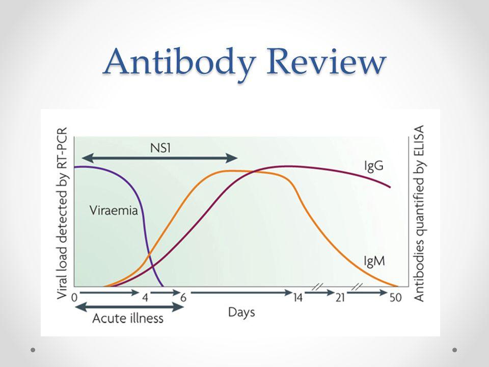 Antibody Review
