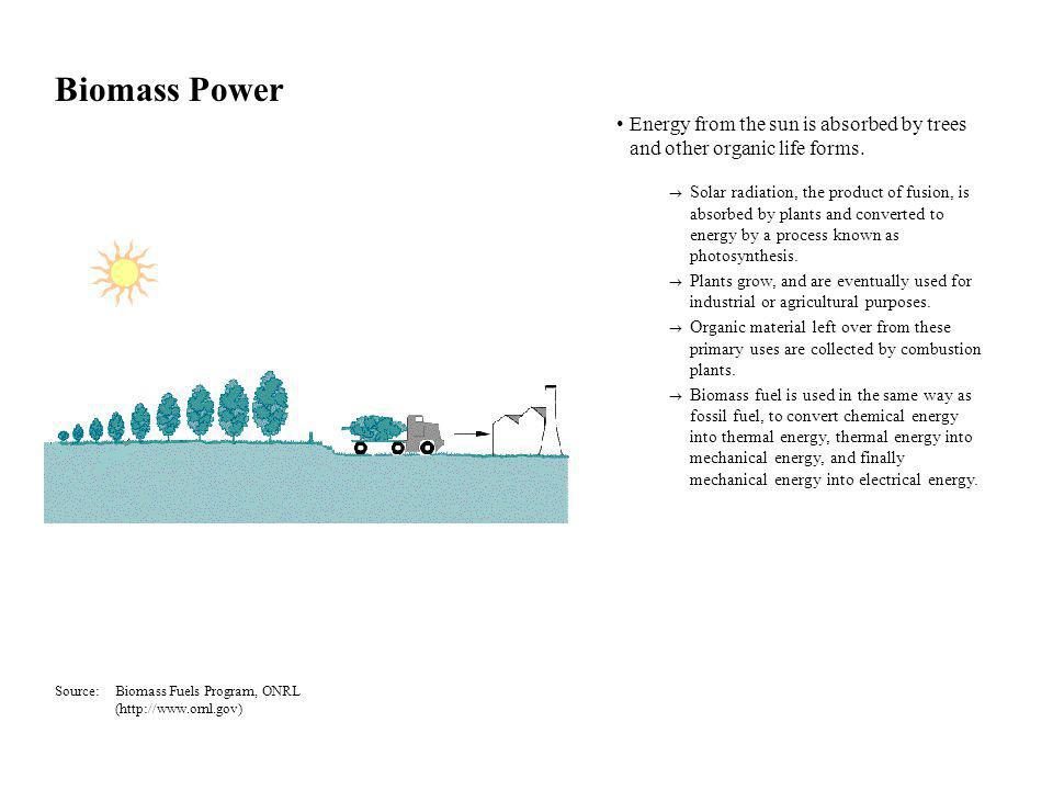 Biomass Power Energy from the sun is absorbed by trees and other organic life forms.