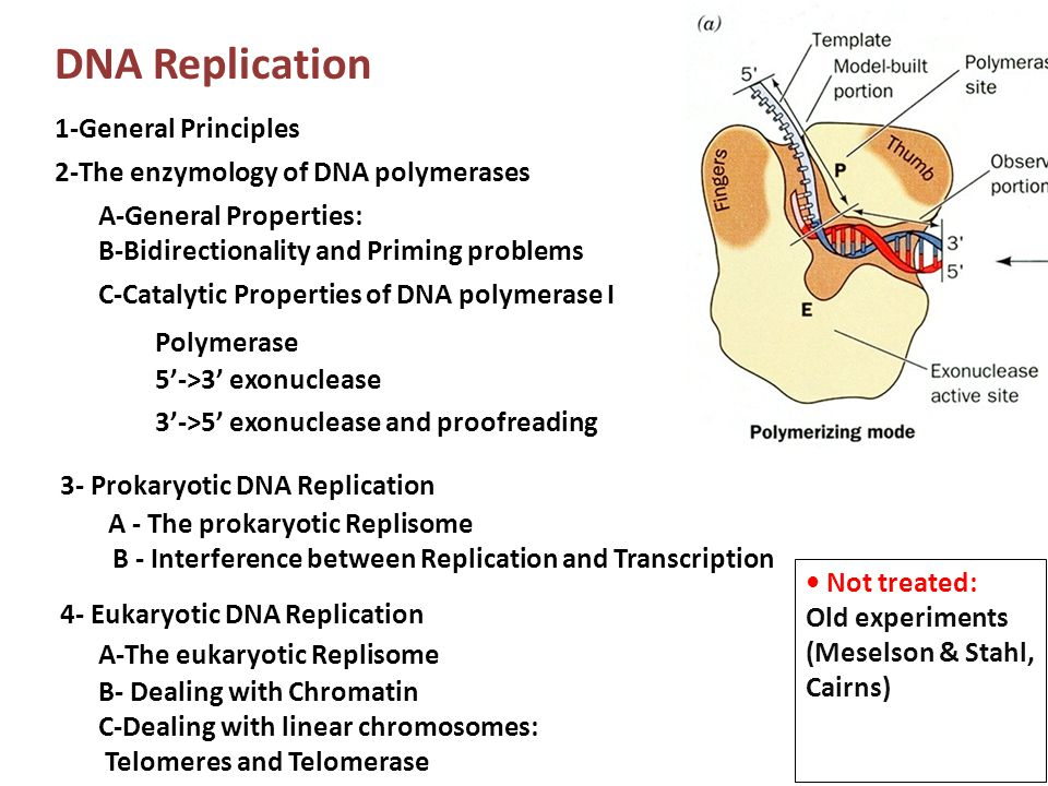 DNA Replication 1-General Principles