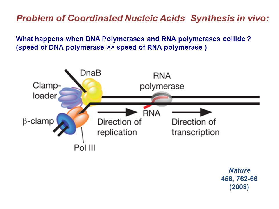 Problem of Coordinated Nucleic Acids Synthesis in vivo: