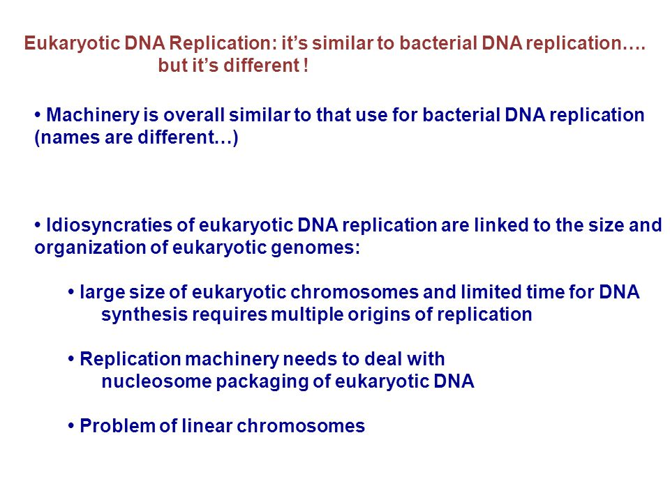 Eukaryotic DNA Replication: it's similar to bacterial DNA replication….