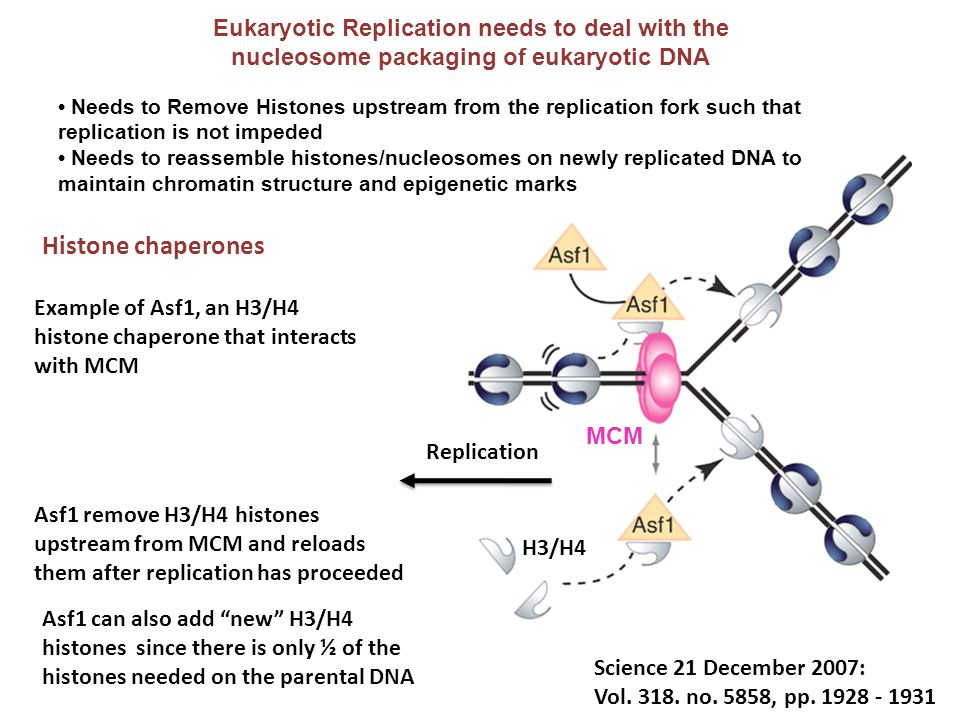 Histone chaperones Eukaryotic Replication needs to deal with the
