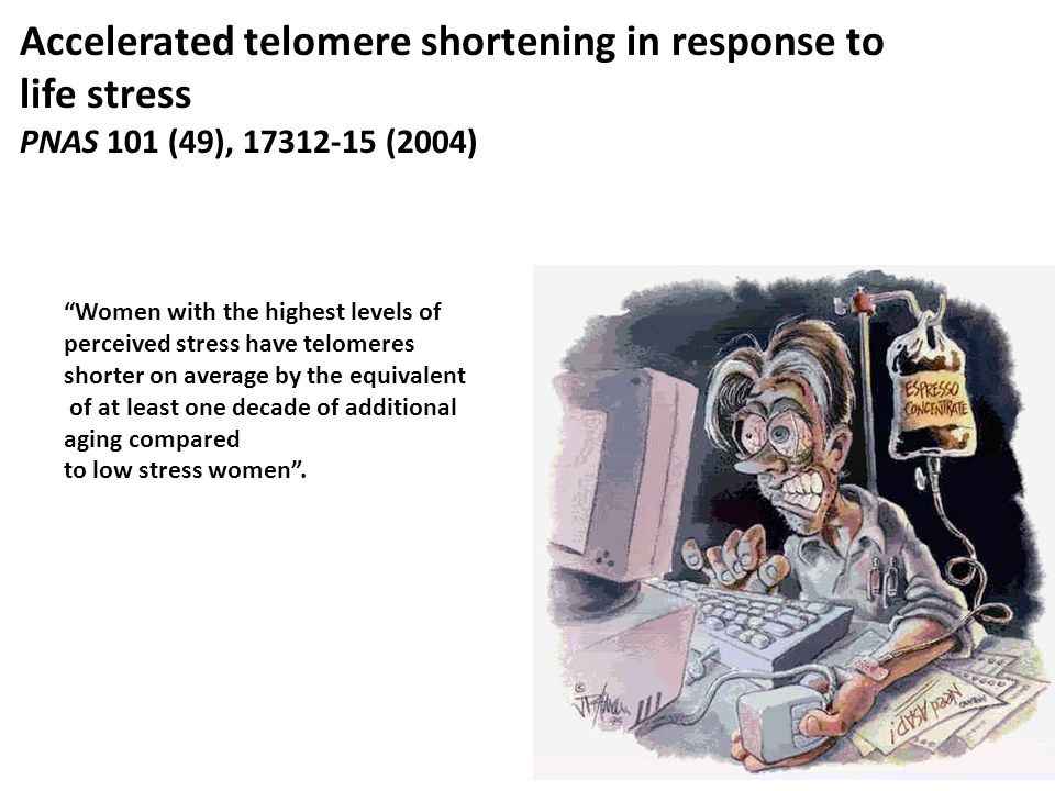 Accelerated telomere shortening in response to life stress
