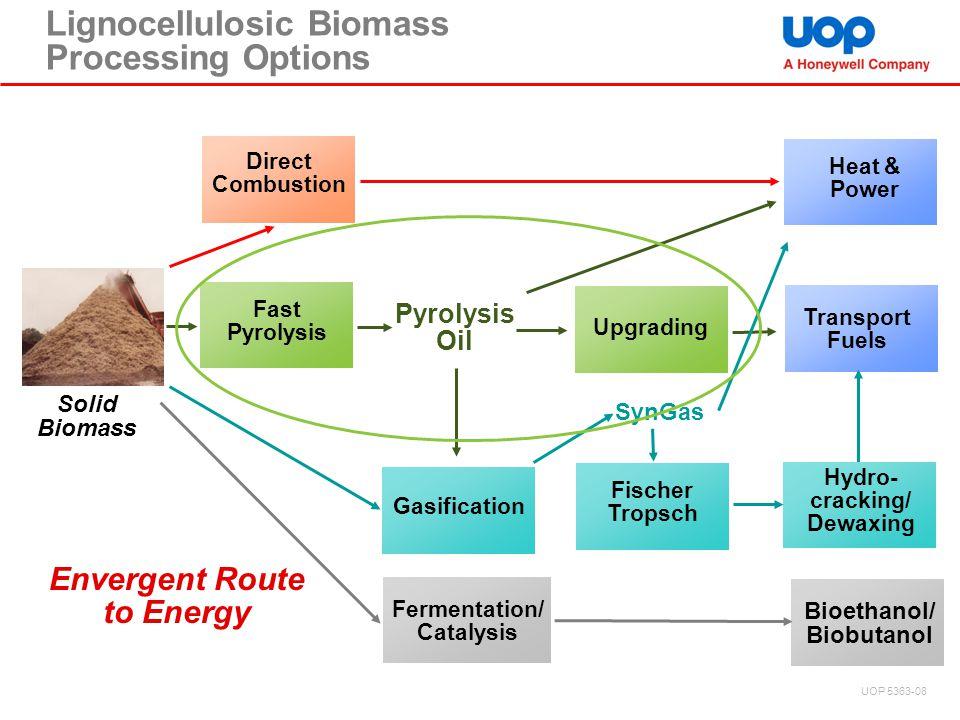 Lignocellulosic Biomass Processing Options