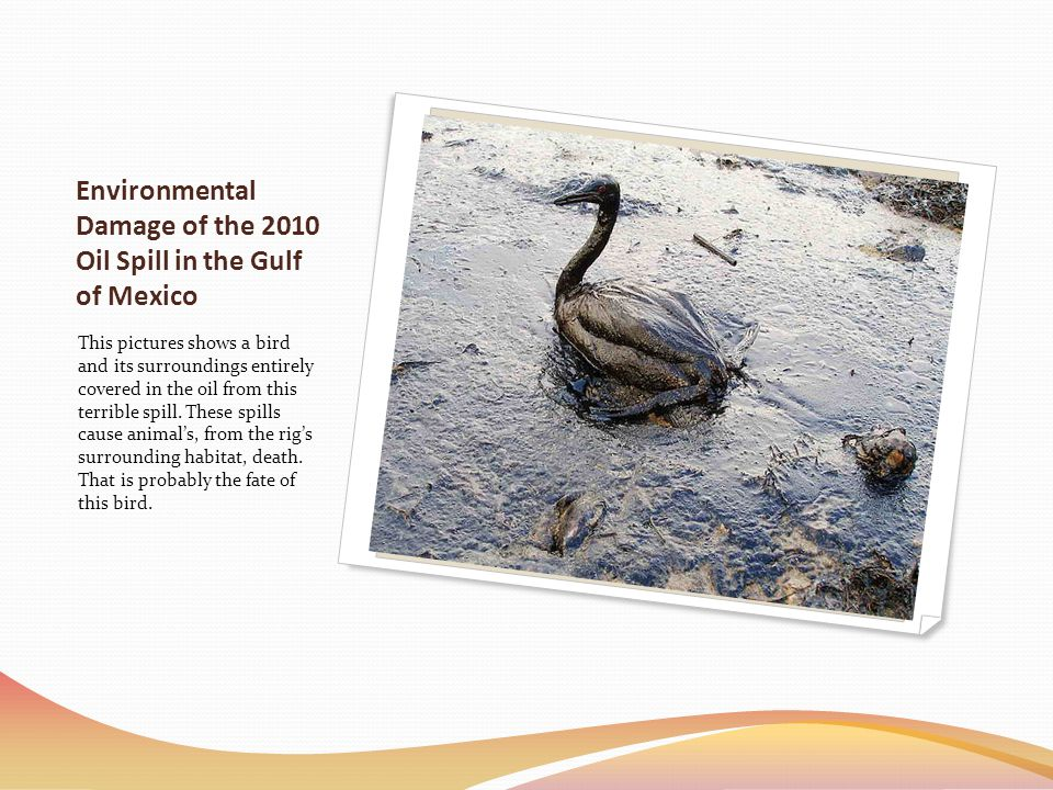 Environmental Damage of the 2010 Oil Spill in the Gulf of Mexico