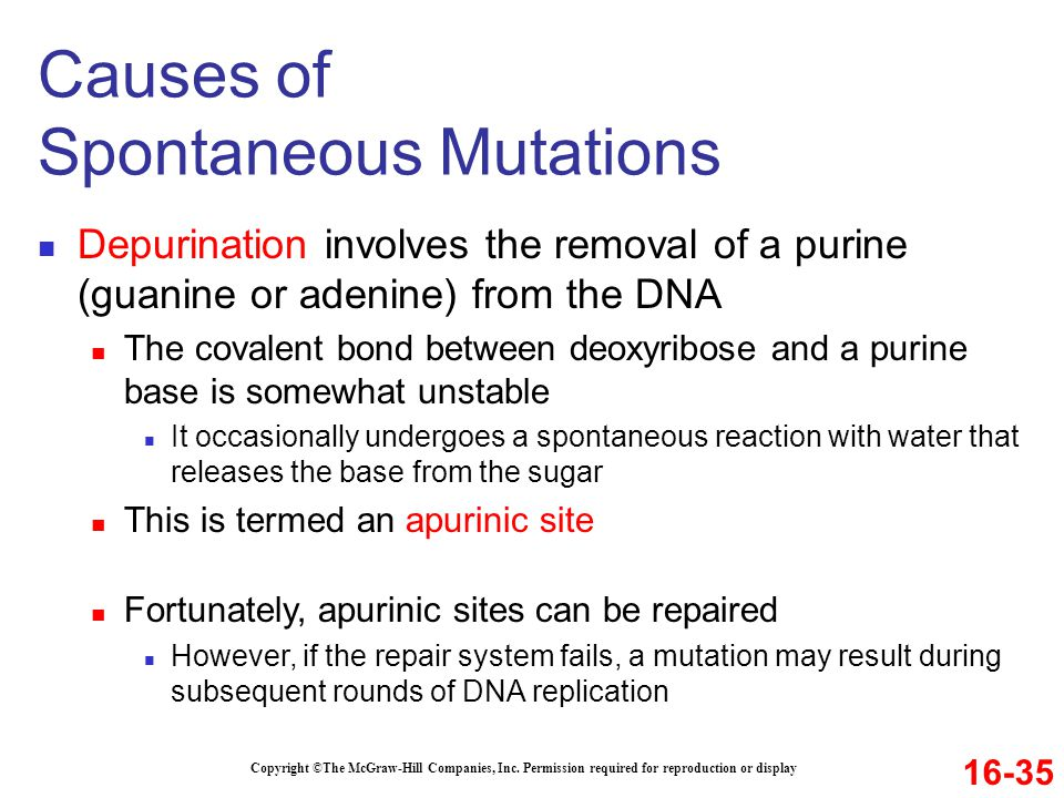 Causes of Spontaneous Mutations