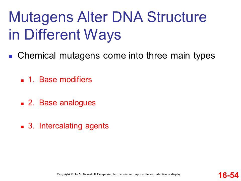 Mutagens Alter DNA Structure in Different Ways
