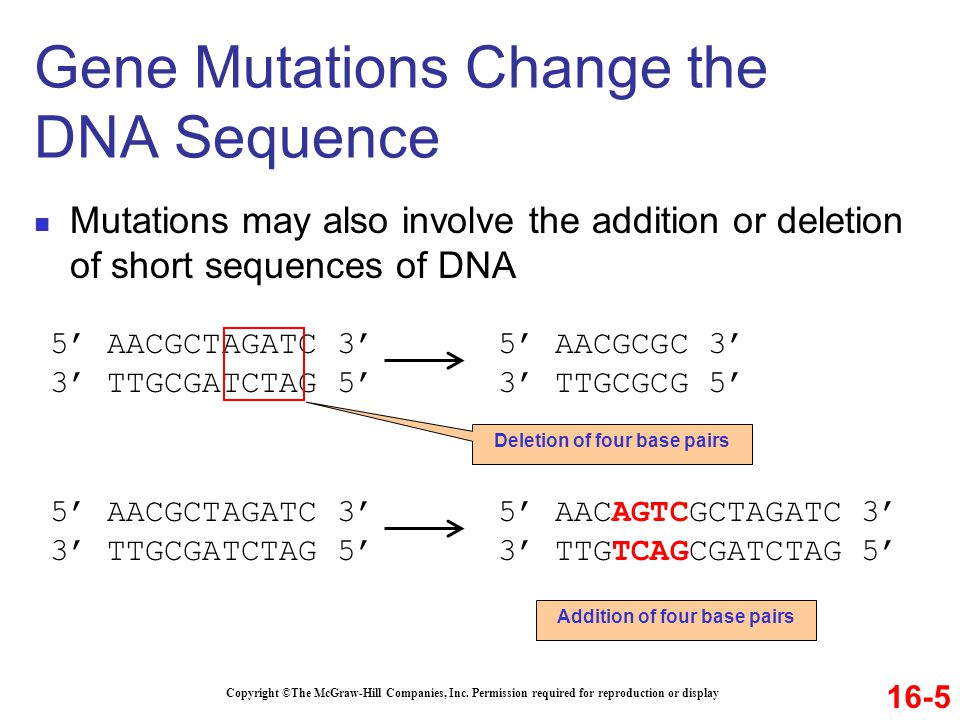 Gene Mutations Change the DNA Sequence