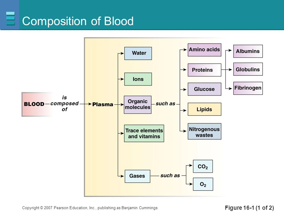 Composition of Blood Figure 16-1 (1 of 2)