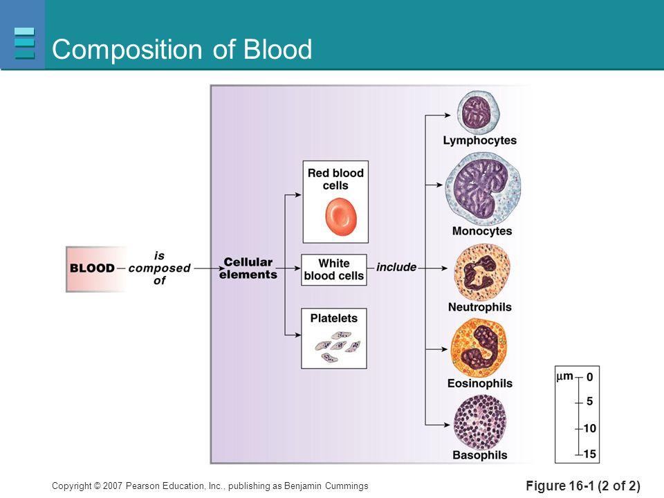 Composition of Blood Figure 16-1 (2 of 2)