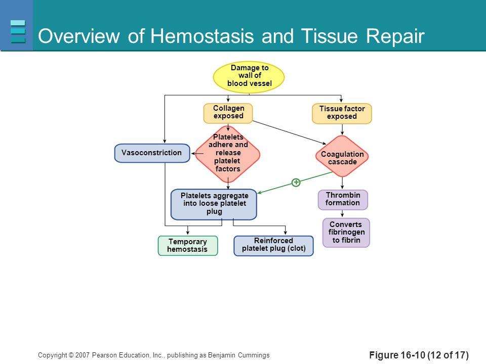 Overview of Hemostasis and Tissue Repair