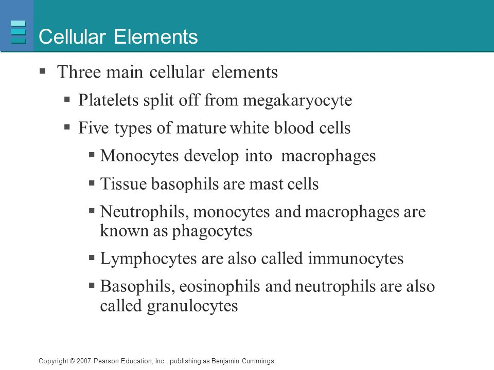 Cellular Elements Three main cellular elements