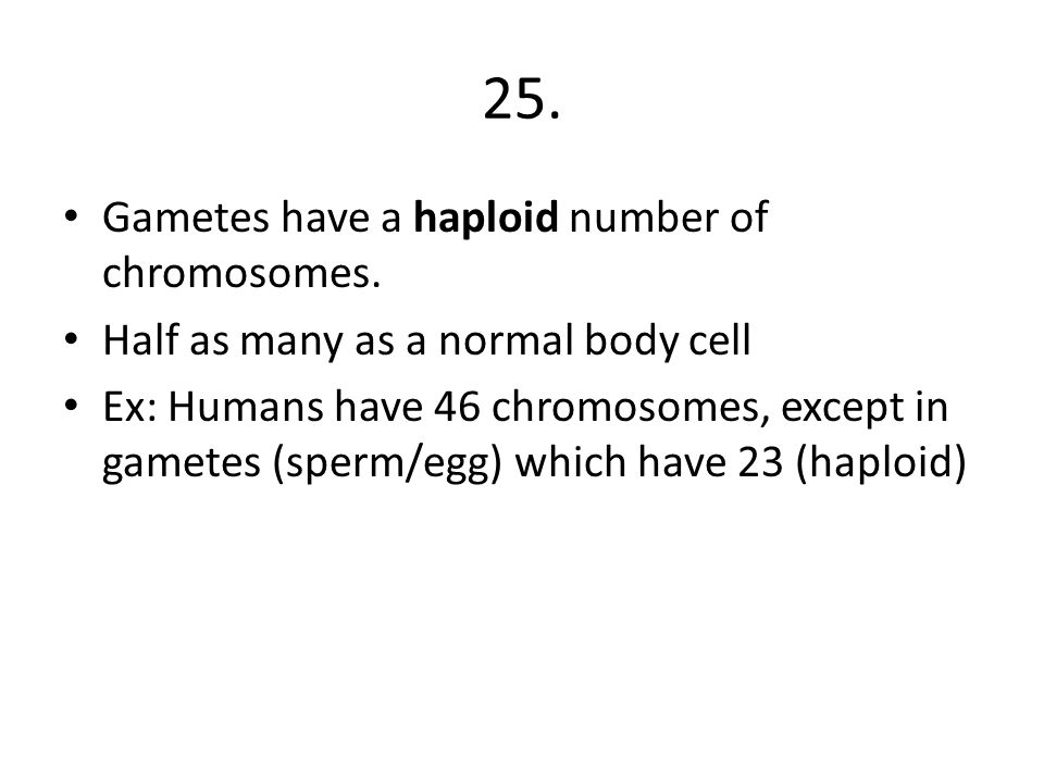 25. Gametes have a haploid number of chromosomes.