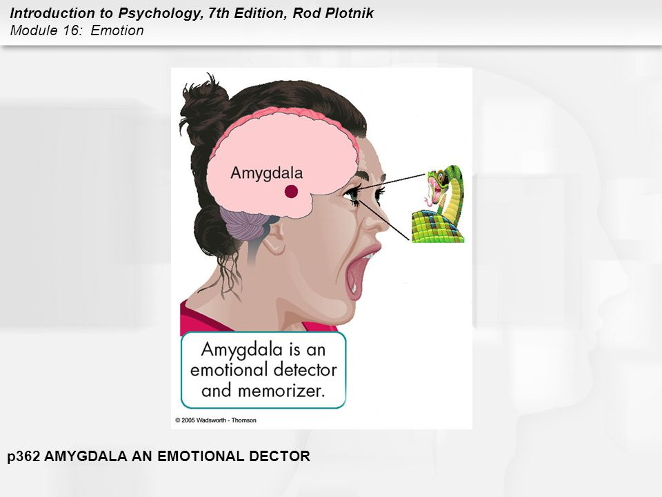 p362 AMYGDALA AN EMOTIONAL DECTOR