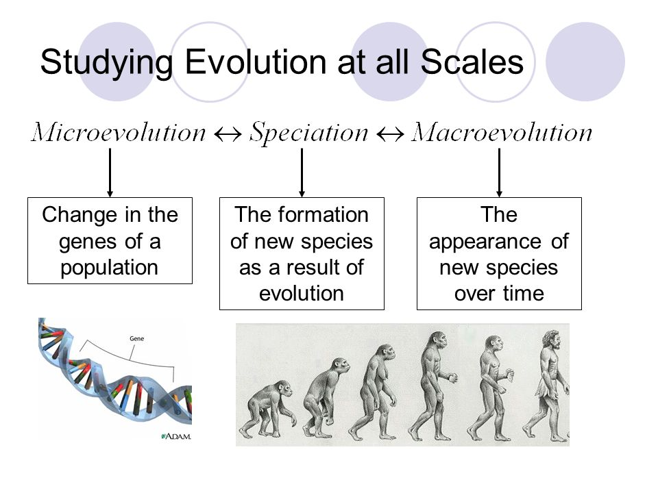 Studying Evolution at all Scales