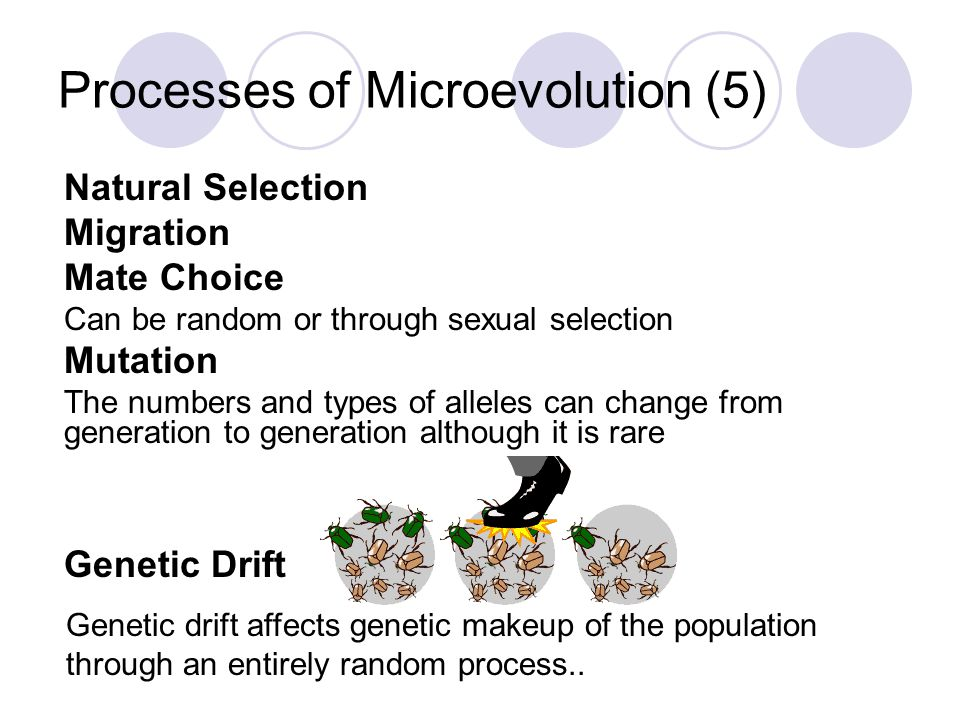 Processes of Microevolution (5)