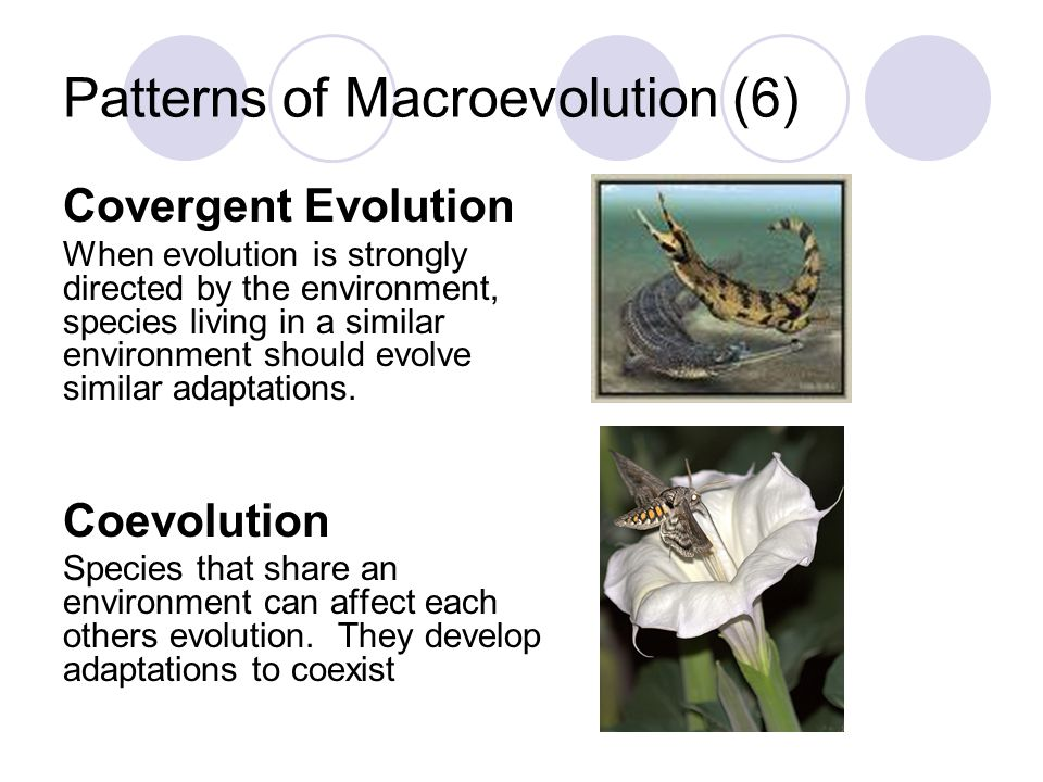 Patterns of Macroevolution (6)