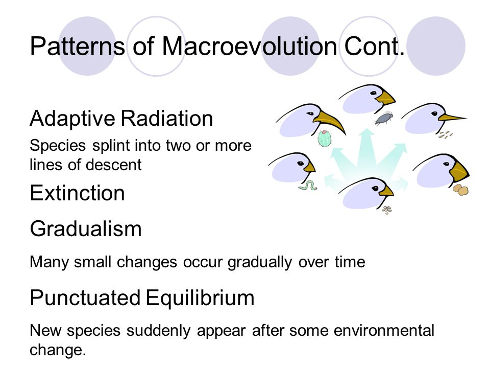 Patterns of Macroevolution Cont.