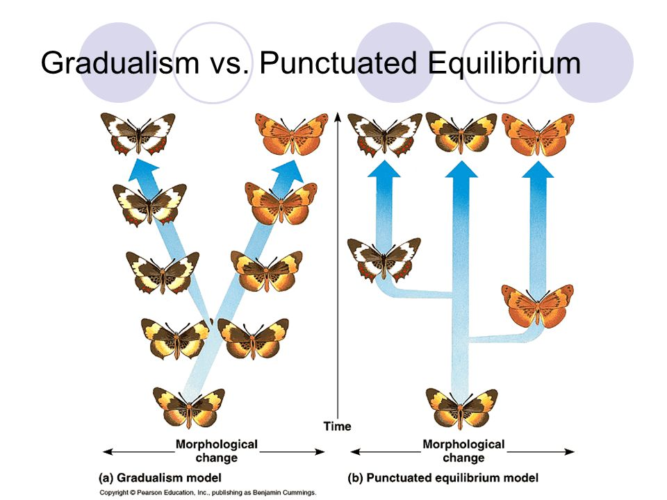 Gradualism vs. Punctuated Equilibrium