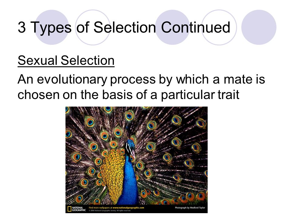 3 Types of Selection Continued