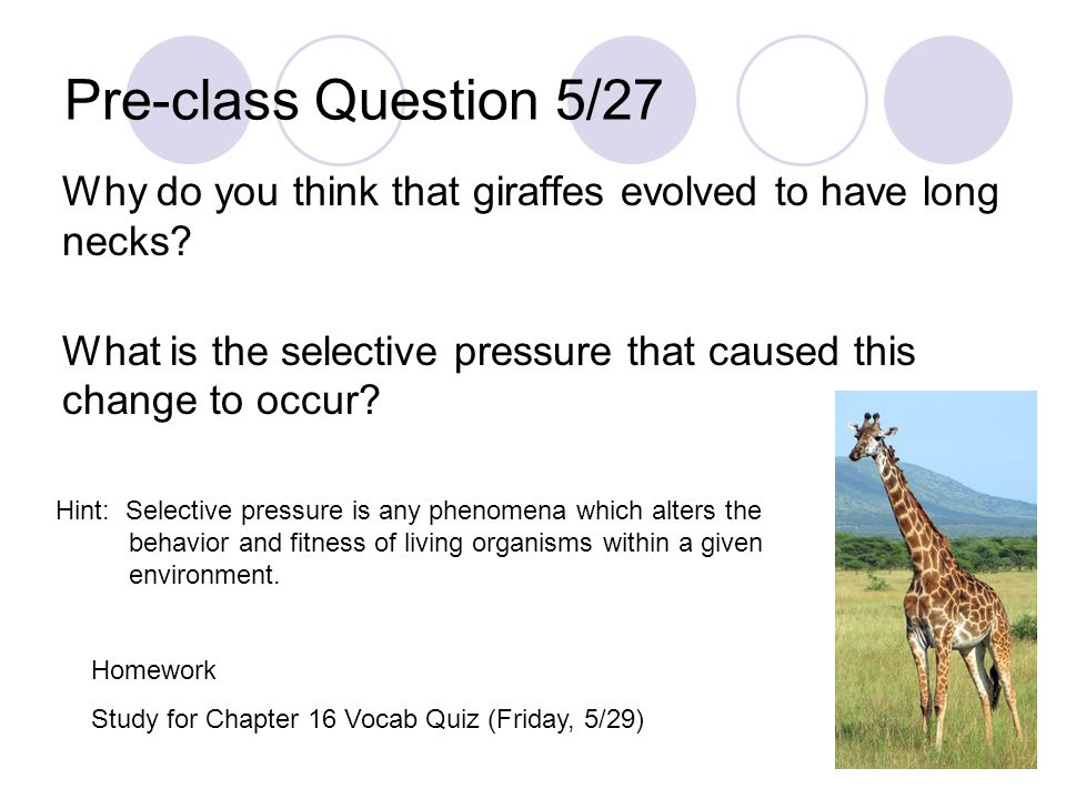 Pre-class Question 5/27 Why do you think that giraffes evolved to have long necks What is the selective pressure that caused this change to occur