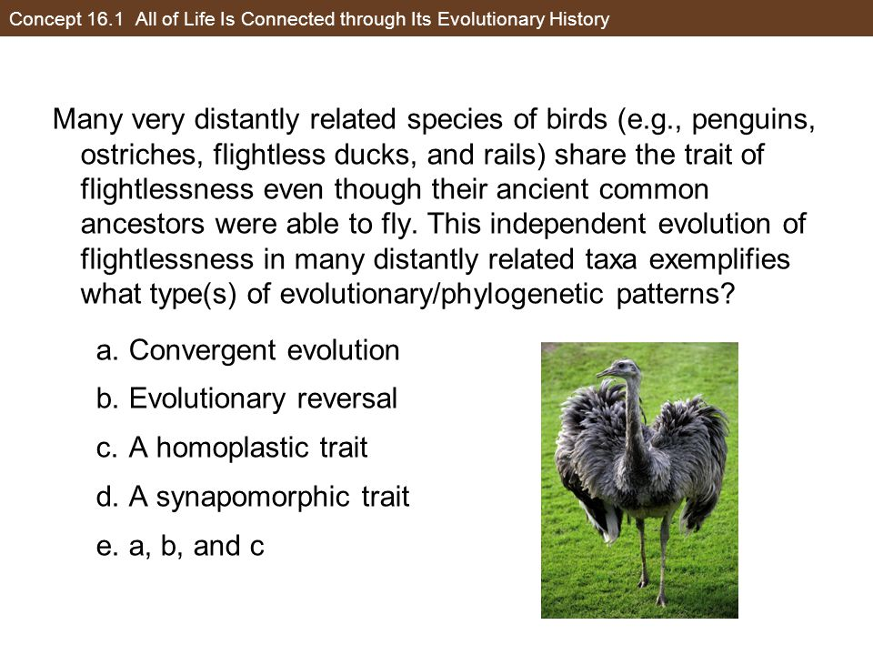 Concept 16.1 All of Life Is Connected through Its Evolutionary History
