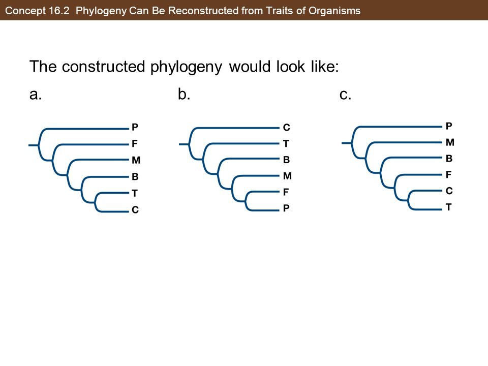Concept 16.2 Phylogeny Can Be Reconstructed from Traits of Organisms