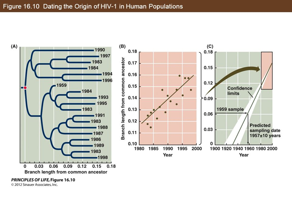Figure 16.10 Dating the Origin of HIV-1 in Human Populations