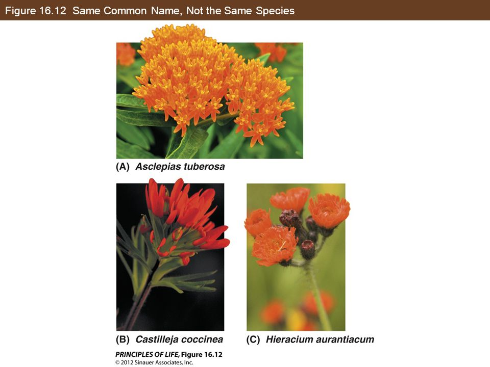 Figure 16.12 Same Common Name, Not the Same Species