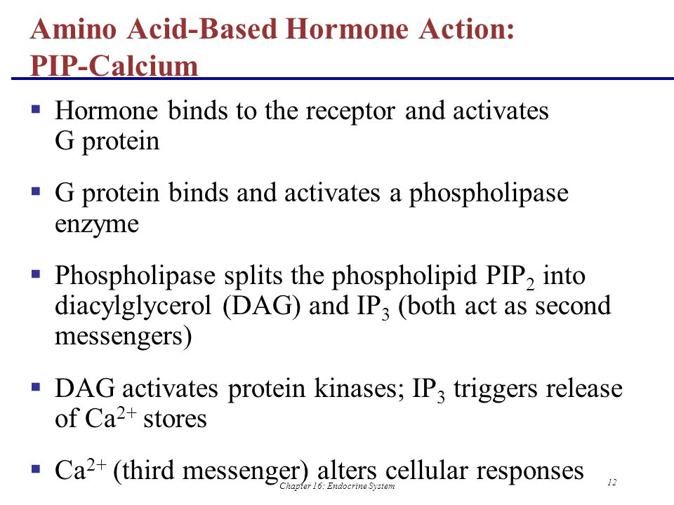 Amino Acid-Based Hormone Action: PIP-Calcium
