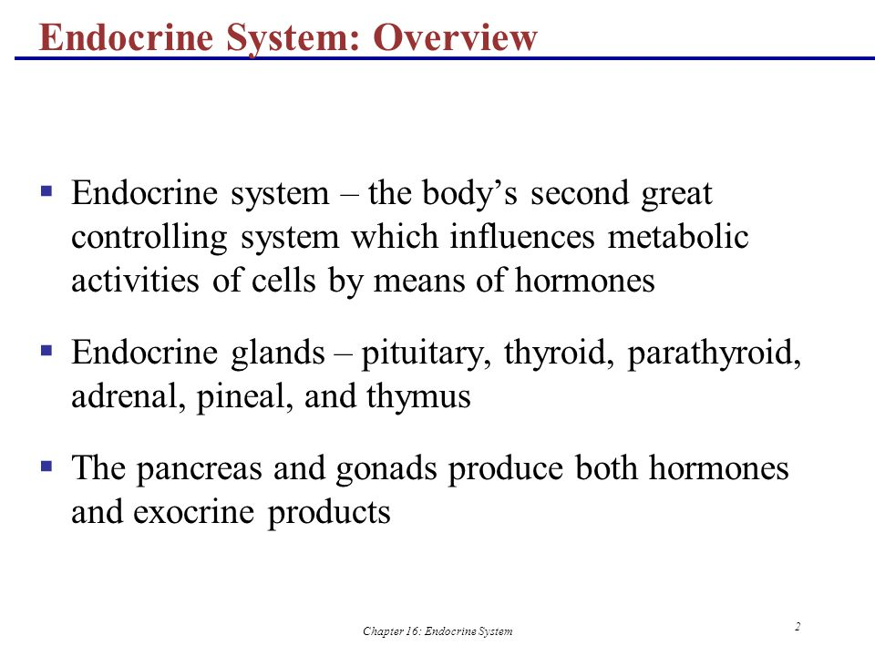 endocrine system essay The endocrine system essay 1347 words | 6 pages the endocrine system is a group of glands distributed throughout the human body this group of glands secretes substances called hormones these hormones are dumping into the bloodstream (shier, butler & lewis, 2009) the endocrine system does not have a single anatomic location.
