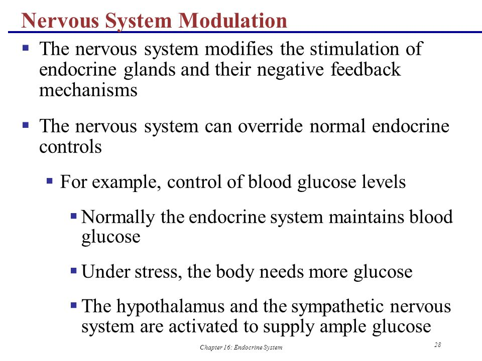 chapter 16 endocrine system Chapter 16 endocrine system study guide - bainbridge read more about hormones, endocrine, hormone, glucose, receptors and thyroid.
