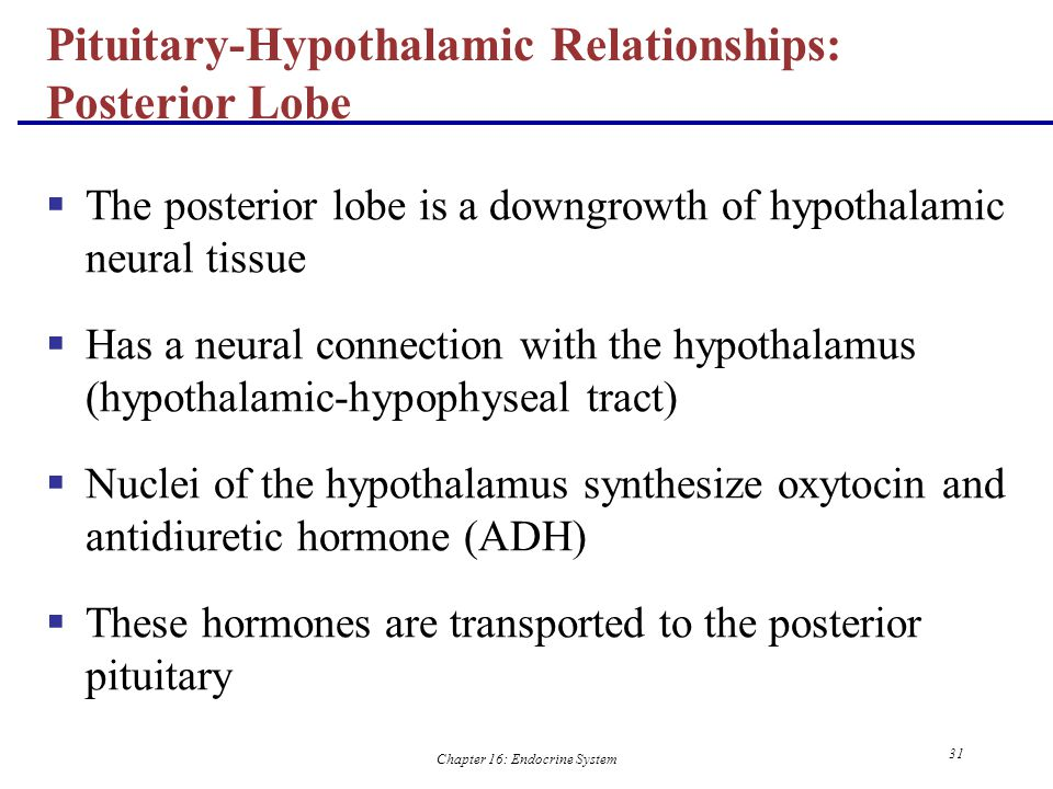 Pituitary-Hypothalamic Relationships: Posterior Lobe