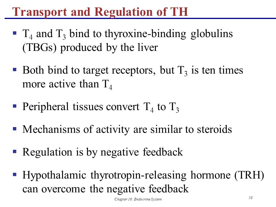Transport and Regulation of TH