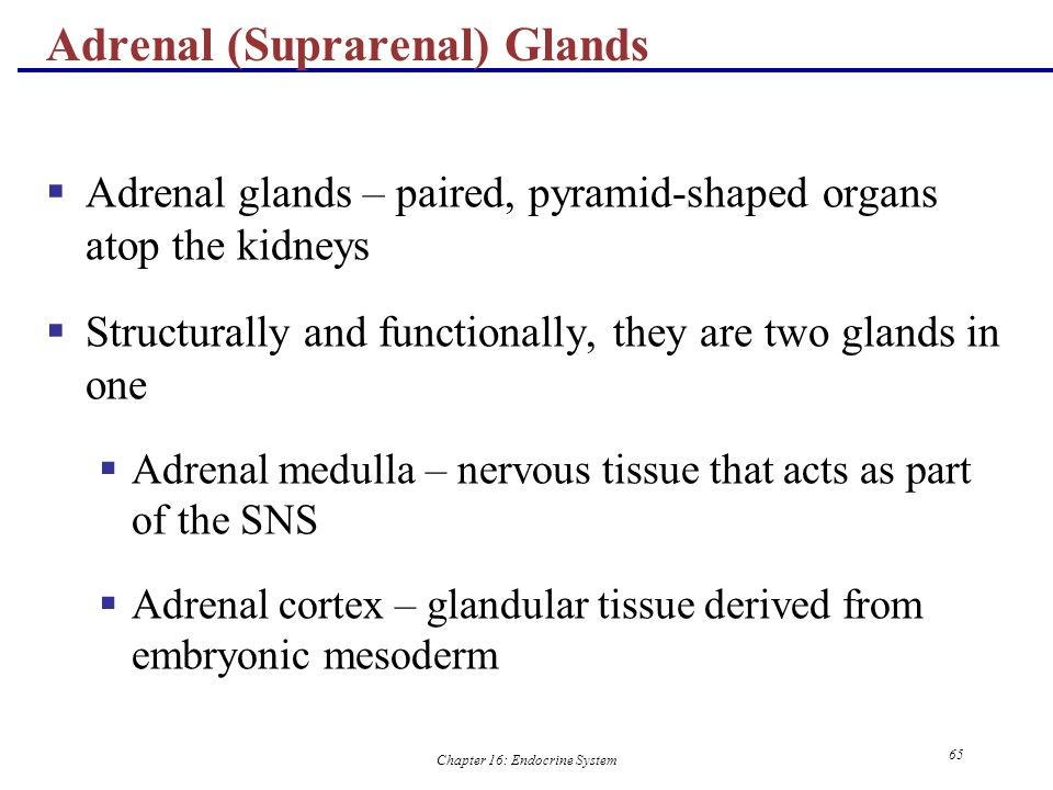 Adrenal (Suprarenal) Glands