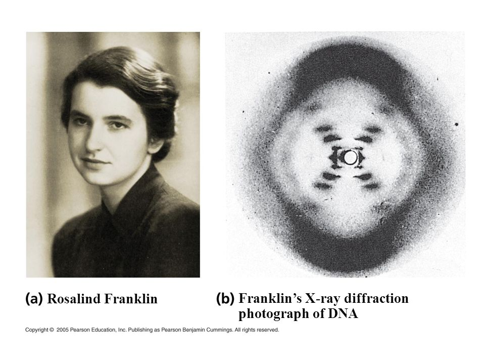 Rosalind Franklin Franklin's X-ray diffraction photograph of DNA