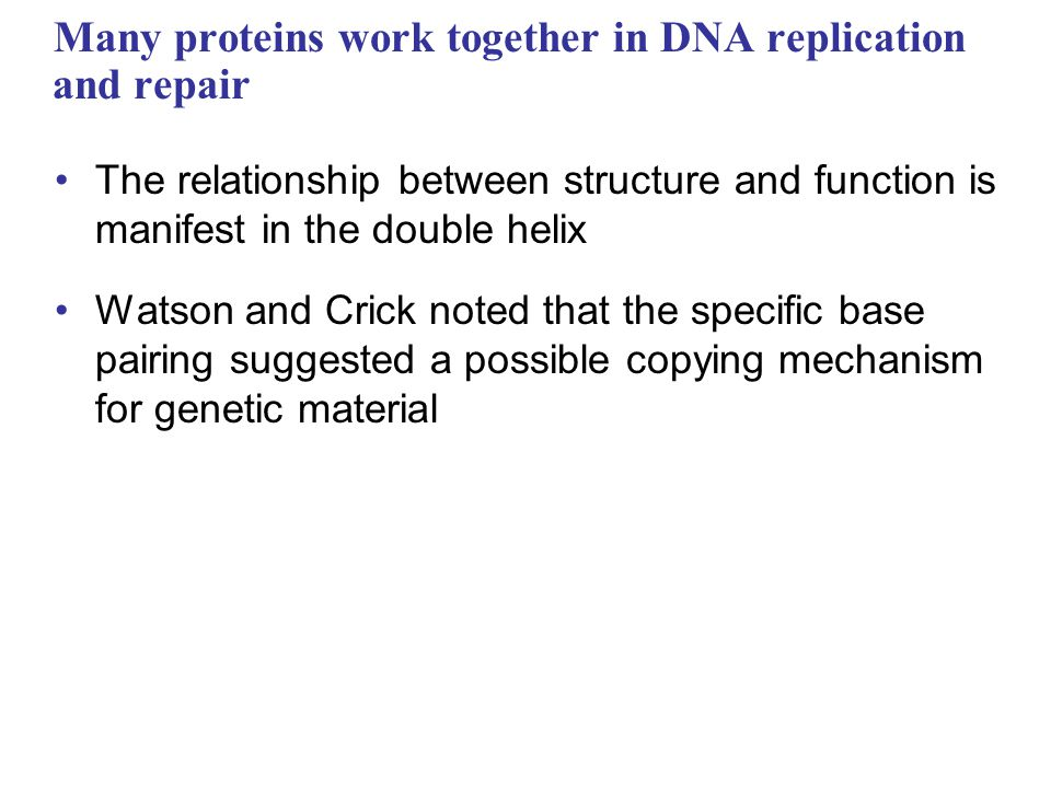 Many proteins work together in DNA replication and repair