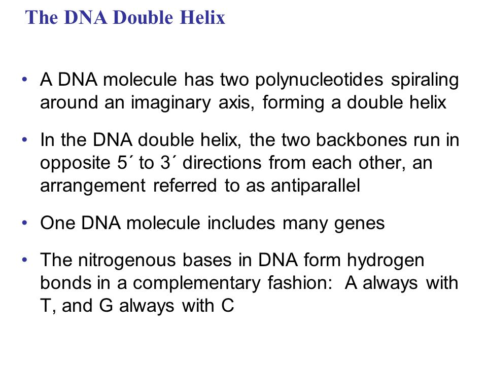 The DNA Double Helix A DNA molecule has two polynucleotides spiraling around an imaginary axis, forming a double helix.